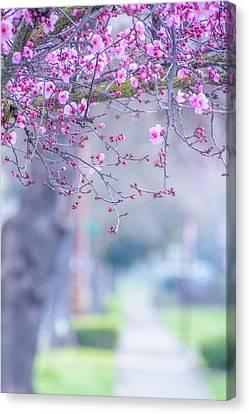 Spring On Vine Street Canvas Print