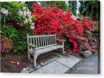 Spring Park Bench Canvas Print by Adrian Evans