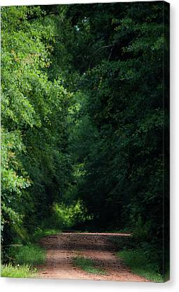 Spring Path Of Light Canvas Print by Shelby Young