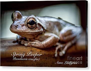 Spring Peeper Canvas Print
