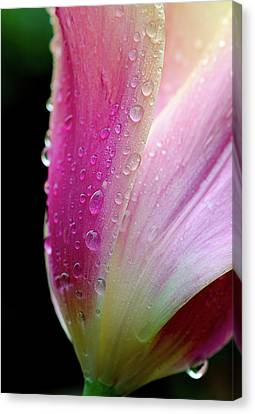 Canvas Print featuring the photograph Spring Petals And Drops by Julie Palencia