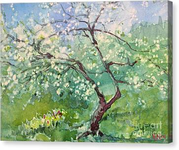 Spring Plum Canvas Print by Elizabeth Carr