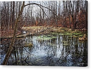 Spring Pond Canvas Print by Phill Doherty
