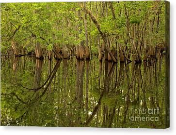 Spring Reflections At Manatee Springs Canvas Print