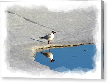 Spring Reflections Canvas Print by Torfinn Johannessen