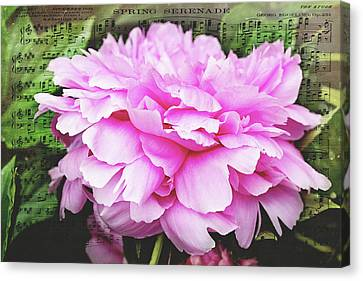 Canvas Print featuring the photograph Spring Serenade  by Trina Ansel