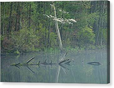 Dogwood Lake Canvas Print - Spring Shoreline With Dogwood by Dean Pennala