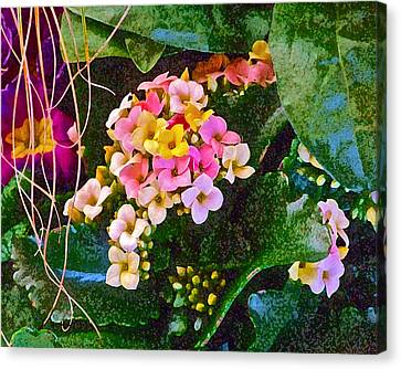 Spring Show 12 Canvas Print