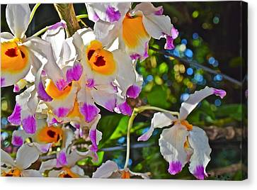 Spring Show 15 Brazilian Orchid Canvas Print