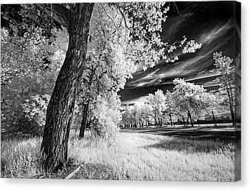 Canvas Print featuring the photograph Spring Sky by Dan Jurak