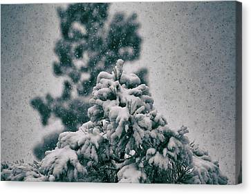 Spring Snowstorm On The Treetops Canvas Print by Jason Coward