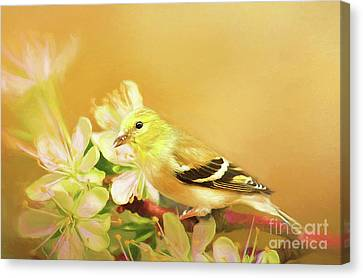 Canvas Print featuring the photograph Spring Song Bird by Darren Fisher
