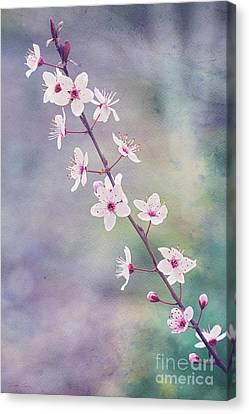 Canvas Print featuring the photograph Spring Splendor by Linda Lees