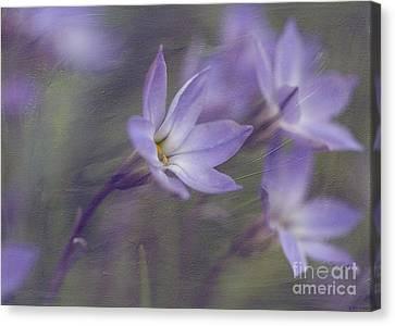 Spring Starflower Canvas Print