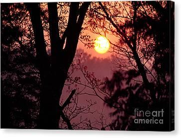 Spring Sunrise Through Trees Canvas Print by Thomas R Fletcher
