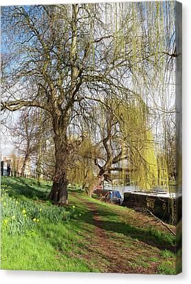 Spring Sunshine On Cambridge Riverbank Canvas Print by Gill Billington