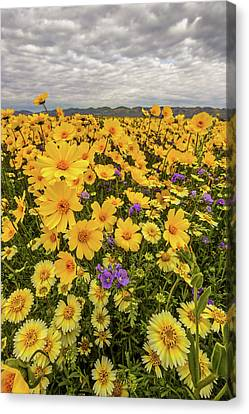 Canvas Print featuring the photograph Spring Super Bloom by Peter Tellone