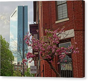 Spring Time In The South End Boston Ma Canvas Print by Toby McGuire