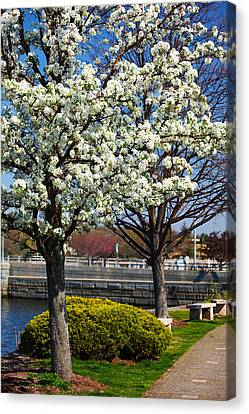 Spring Time In Westport Canvas Print
