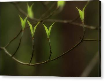 Canvas Print featuring the photograph Spring Time by Mike Eingle