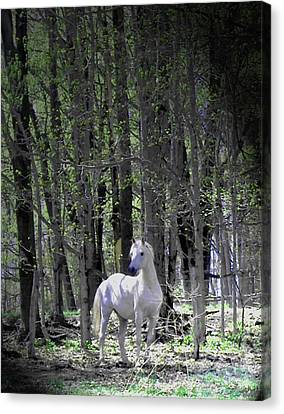 Canvas Print - Spring Time With The Stallion by Patricia Keller