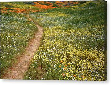 Canvas Print featuring the photograph Spring Trail Through A Sea Of Wildflowers At Diamond Lake In California by Jetson Nguyen