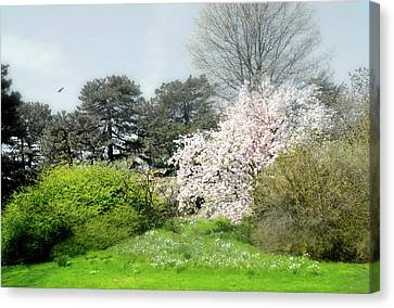 Canvas Print featuring the photograph Spring Treasures by Diana Angstadt