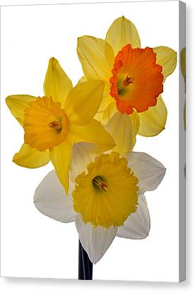 Spring Trio Canvas Print by Terence Davis