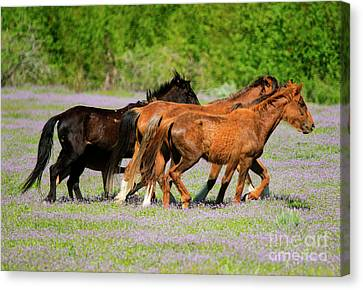 Spring Trot Canvas Print by Mike Dawson