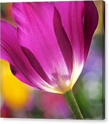 Spring Tulip - Square Canvas Print