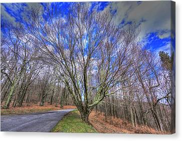Spring Version Of The Autumn Drive Canvas Print by Shannon Louder