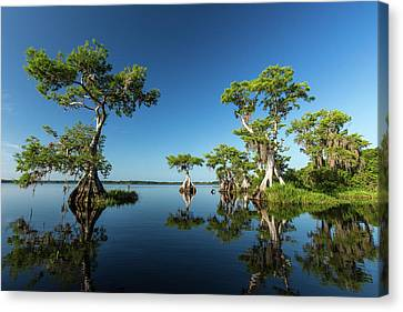 Spring Vistas At Lake Disston Canvas Print