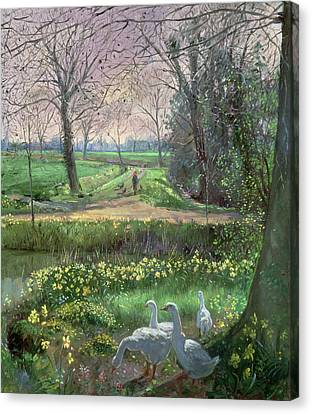 Spring Walk Canvas Print by Timothy Easton