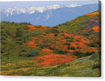 Canvas Print featuring the photograph Spring Wildflower Display At Diamond Lake In California by Jetson Nguyen