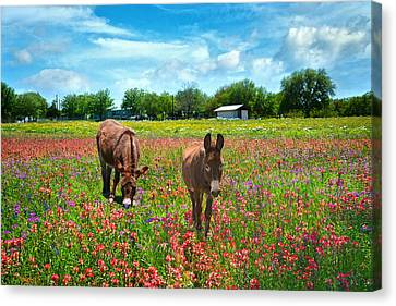 Spring Wildflower Feast Canvas Print by Lynn Bauer