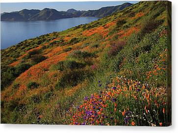 Canvas Print featuring the photograph Spring Wildflower Season At Diamond Lake In California by Jetson Nguyen