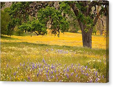 Oak Canvas Print - Spring Wildflowers by Carol Leigh