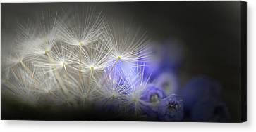 Canvas Print featuring the photograph Spring Wishes by Kim Henderson