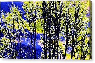 Colorful Sky Canvas Print - Spring Woodland  by Will Borden