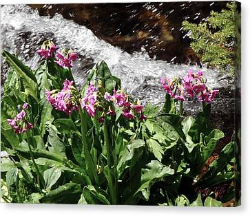 Springflowers Canvas Print by George Tuffy
