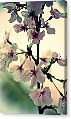Spring's Delicate Dance Canvas Print by KayeCee Spain