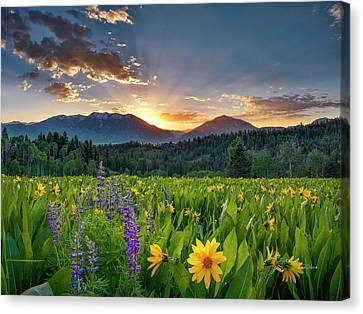 Rooted Canvas Print - Spring's Delight by Leland D Howard
