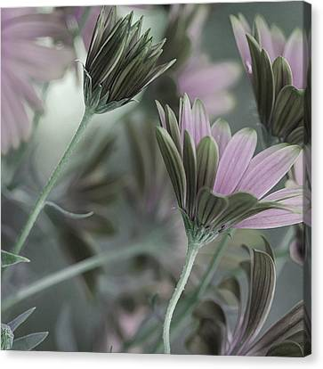 Spring's Glory Canvas Print