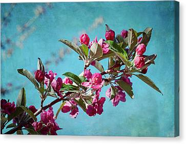 Springtime Crabapple Flowers Canvas Print