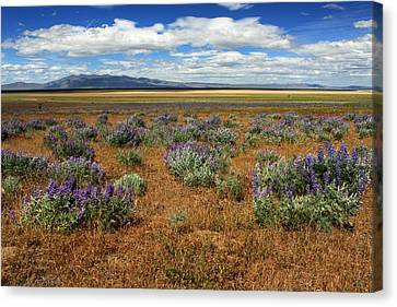 Springtime In Honey Lake Valley Canvas Print by James Eddy