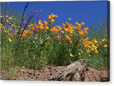 Canvas Print featuring the photograph Springtime In Southern California by Cliff Wassmann