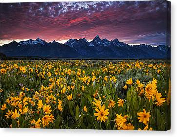 Springtime In The Mountains Canvas Print by Andrew Soundarajan