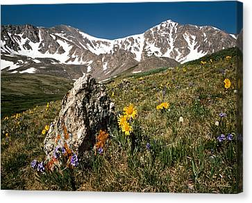 Springtime In The Rockies Canvas Print by Joe Bonita