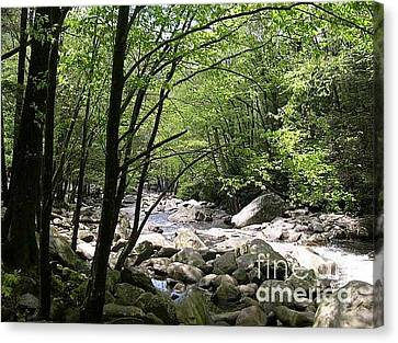 Springtime In The Smoky Mountains Canvas Print by Barb Montanye Meseroll