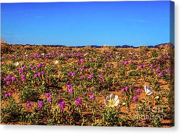 Canvas Print featuring the photograph Springtime In The Sonoran Desert by Robert Bales